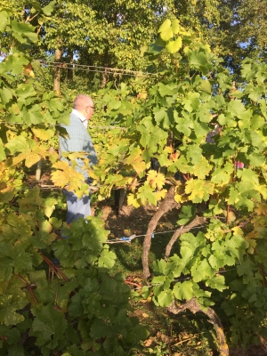 A vineyard tour